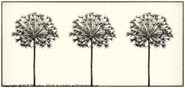 Antique Allium Trio Canvas print by Phill Thornton