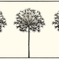Buy canvas prints of Antique Allium Trio by Phill Thornton