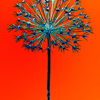 Buy canvas prints of Abstract Allium No.5 by Phill Thornton