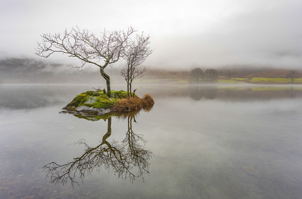 The Lone Tree on Rydal Water, Lake District, UK  Canvas print by Rob Bickerstaffe
