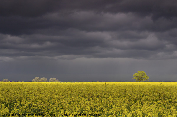 A storm brewing over a rapeseed field Canvas print by Wendy McDonnell
