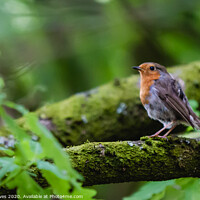 Buy canvas prints of A small bird perched on a tree branch by Ben Delves