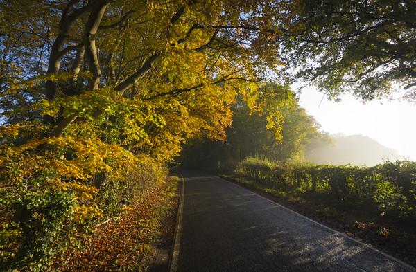 Autumnal lane Canvas print by Lukasz Lukomski