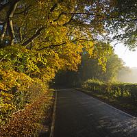 Buy canvas prints of Autumnal lane by Lukasz Lukomski