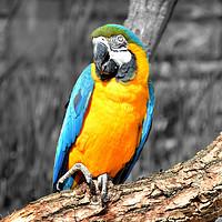 Buy canvas prints of Bird  by Nar Sunuwar