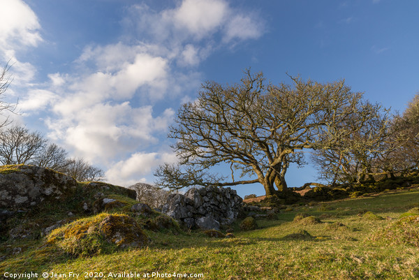 Trees and stone wall on Dartmoor Canvas Print by Jean Fry