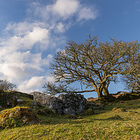 Buy canvas prints of Trees and stone wall on Dartmoor by Jean Fry