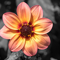 Buy canvas prints of Flame and pink flower by Kevin Arscott