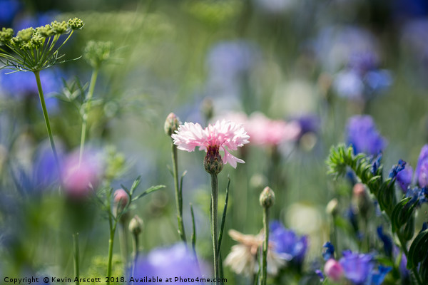 Pink flower in the meadow Canvas print by Kevin Arscott