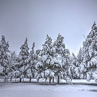 Buy canvas prints of Snowfall and trees by Kevin Arscott