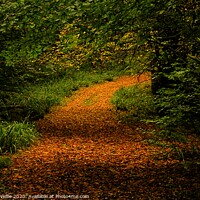 Buy canvas prints of Golden path by Ross McNeillie