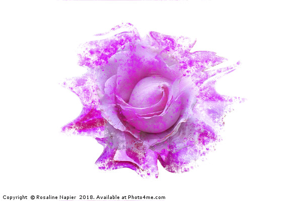 Pink rose light paint splatter effect  Canvas print by Rosaline Napier
