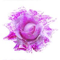 Buy canvas prints of Pink rose light paint splatter effect  by Rosaline Napier