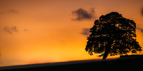 Sunset Tree Framed Mounted Print by Duncan Loraine