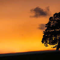 Buy canvas prints of Sunset Tree by Duncan Loraine