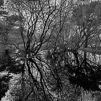 Buy canvas prints of Tree reflections in a pond by Stuart C Clarke