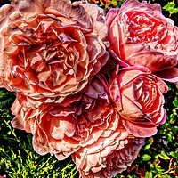 Buy canvas prints of A bouquet of pink rose flowers         by Cherise Man