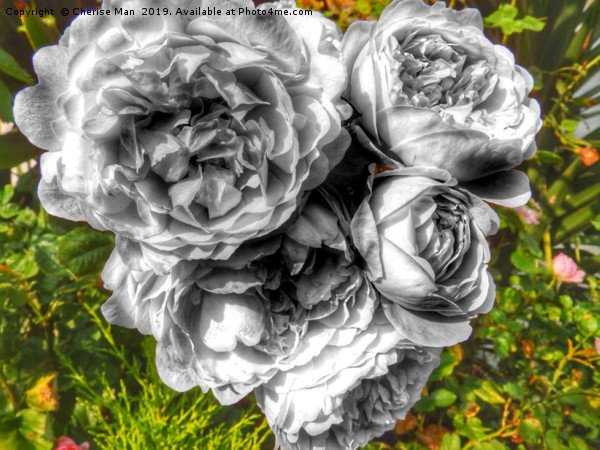 A black and white bouquet of pink rose flowers Canvas print by Cherise Man