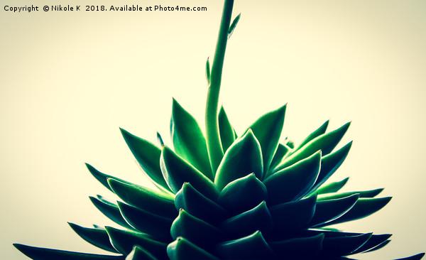 Houseleek plant Canvas Print by Nikole K
