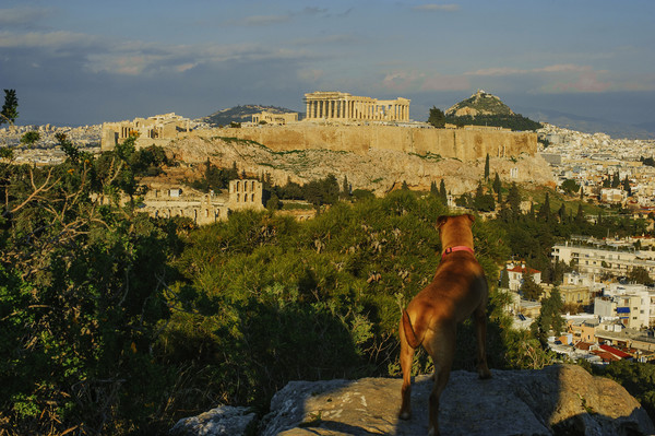 Guardian Dog of Athens Framed Mounted Print by Cassi Moghan