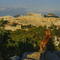 Buy canvas prints of Guardian Dog of Athens by Cassi Moghan