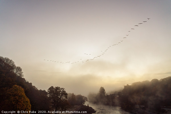 Geese migrating over Pitlochry on foggy morning Canvas print by Chris Rabe