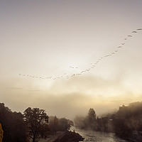 Buy canvas prints of Geese migrating over Pitlochry on foggy morning by Chris Rabe