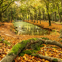 Buy canvas prints of An Autumn landscape scene by Martin Bowra
