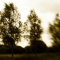 Buy canvas prints of Trees by David Jeffery