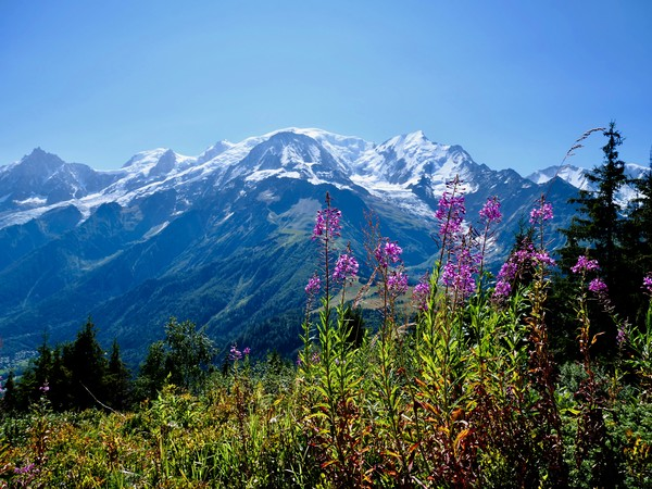 Mont Blanc from Petit Prarion - 2 Canvas Print by Nathalie Hales