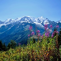 Buy canvas prints of Mont Blanc from Petit Prarion - 2 by Nathalie Hales