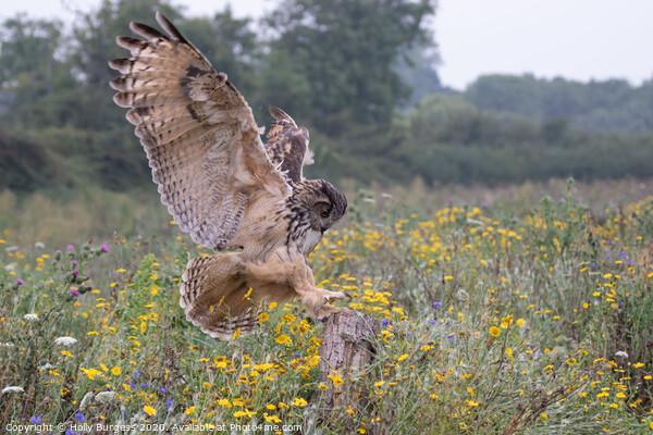 Eurasian eagle owl  Print by Holly Burgess