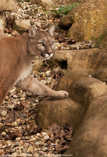 Cougar Puma Wild Cat Canvas Print by Holly Burgess