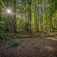Buy canvas prints of Tehidy Woods  by craig parkes