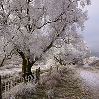 Buy canvas prints of Trees covered in hoar frost  by Jenny Hibbert