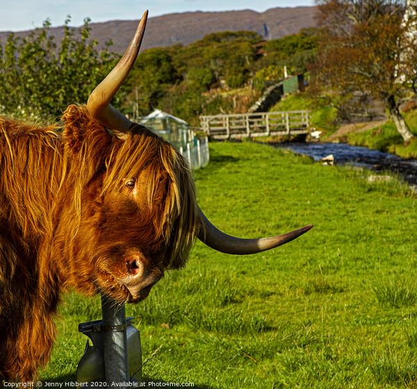 Highland cow enjoying a scratch on sign post Canvas Print by Jenny Hibbert