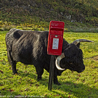 Buy canvas prints of Highland cow enjoying a scratch against a post box by Jenny Hibbert