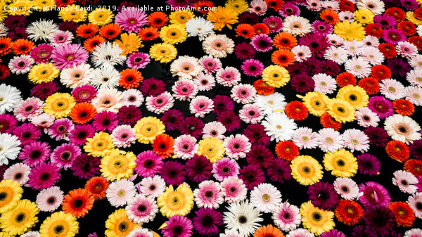 Fountain Flowers Canvas print by Nando Lardi