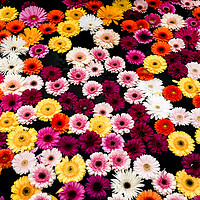Buy canvas prints of Fountain Flowers by Nando Lardi