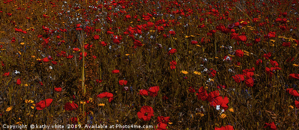 A field of red  flowering poppies  inCornwall  Canvas Print by kathy white
