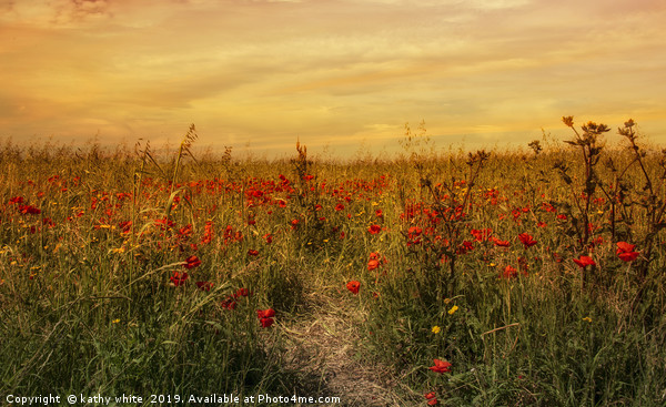 red poppies,Sunset on a field of poppies in cornwa Canvas Print by kathy white