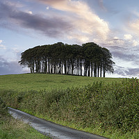 Buy canvas prints of Nearly Home Trees, Coming home trees, Cornwall  by kathy white