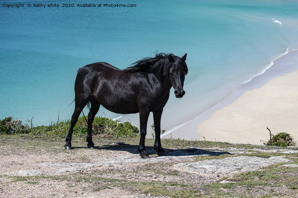 Cornwall wild  Black horse,Pedn Vounder Beach, Pol Canvas Print by kathy white