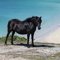 Buy canvas prints of Cornwall wild  Black horse,Pedn Vounder Beach, Pol by kathy white