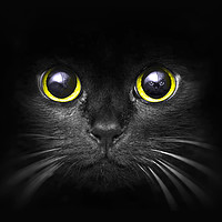 Buy canvas prints of Dark Predator by Robert Barnes