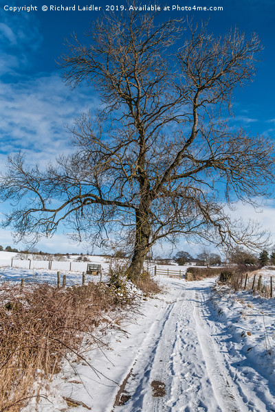 Snowy Lane and Ash Tree Silhouette Canvas print by Richard Laidler