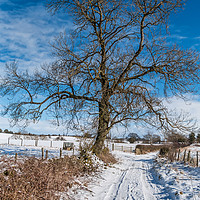 Buy canvas prints of Snowy Lane and Ash Tree Silhouette by Richard Laidler