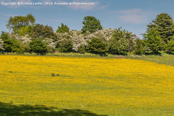 Buttercup Meadow Canvas Print by Richard Laidler
