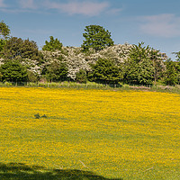 Buy canvas prints of Buttercup Meadow by Richard Laidler