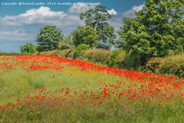 Field Poppies and Oilseed Rape Canvas print by Richard Laidler